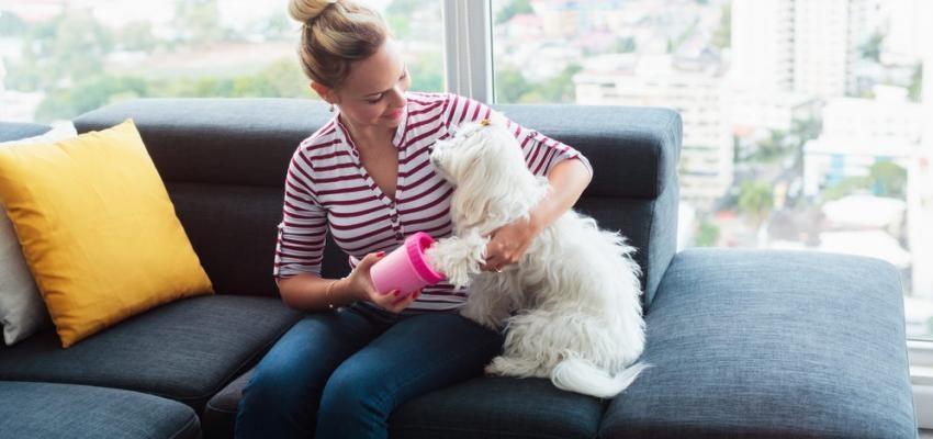 mulher sentada no sofá a brincar com cão ao colo