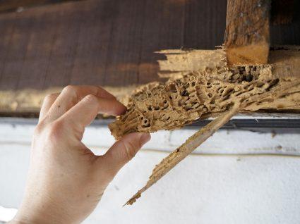como evitar o bicho da madeira