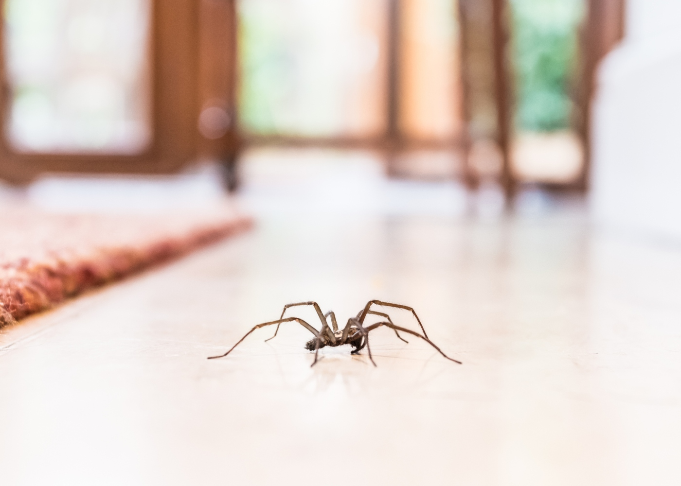 um dos insetos em casa, no chão