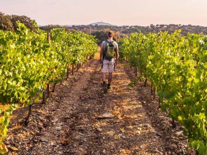 Pelos vinhos do Algarve: as melhores praias do sul ao sabor das vinhas da região