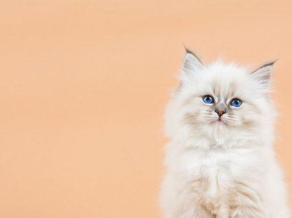 Estudo confirma que gatos reconhecem os nomes