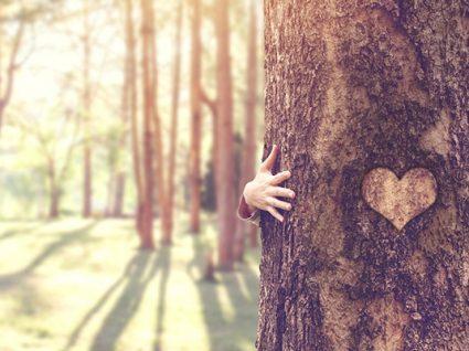 Quer uma árvore? Instituto da Conservação da Natureza tem 166 mil para dar