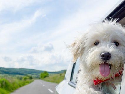Dicas para viajar com animais de estimação felizes e seguros