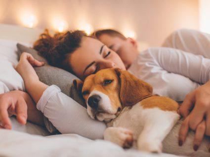 Animais a dormir no quarto alteram a qualidade do sono dos donos?