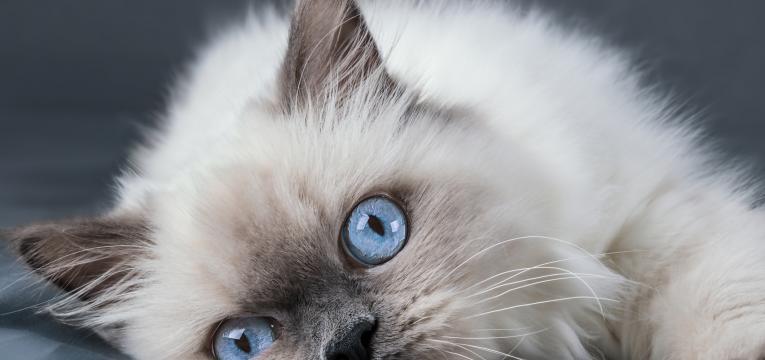 gatos reconhecem os nomes