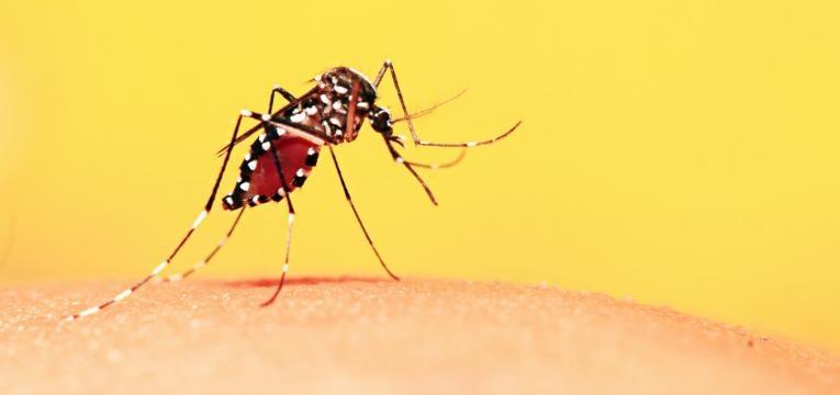 alergia a insectos