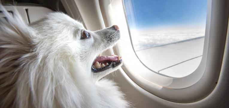 viajar com animais de estimação