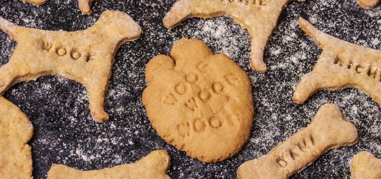 comida caseira animais domésticos para ter menos plástico em casa