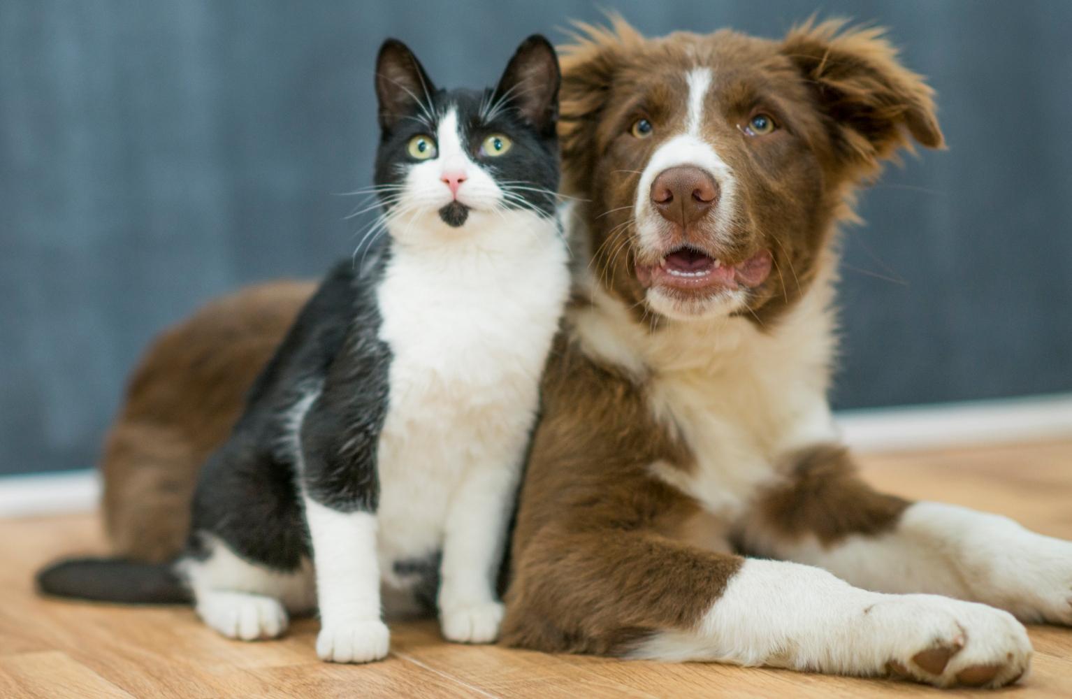 animais de estimação novos