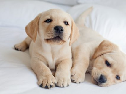 Hotéis para cães de norte a sul