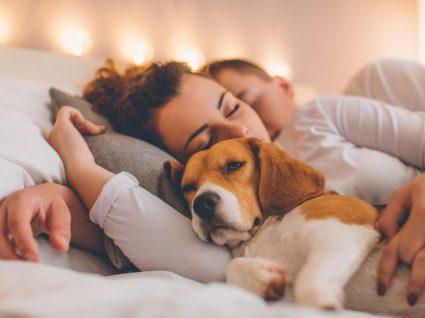 Animais a dormir no quarto dos donos