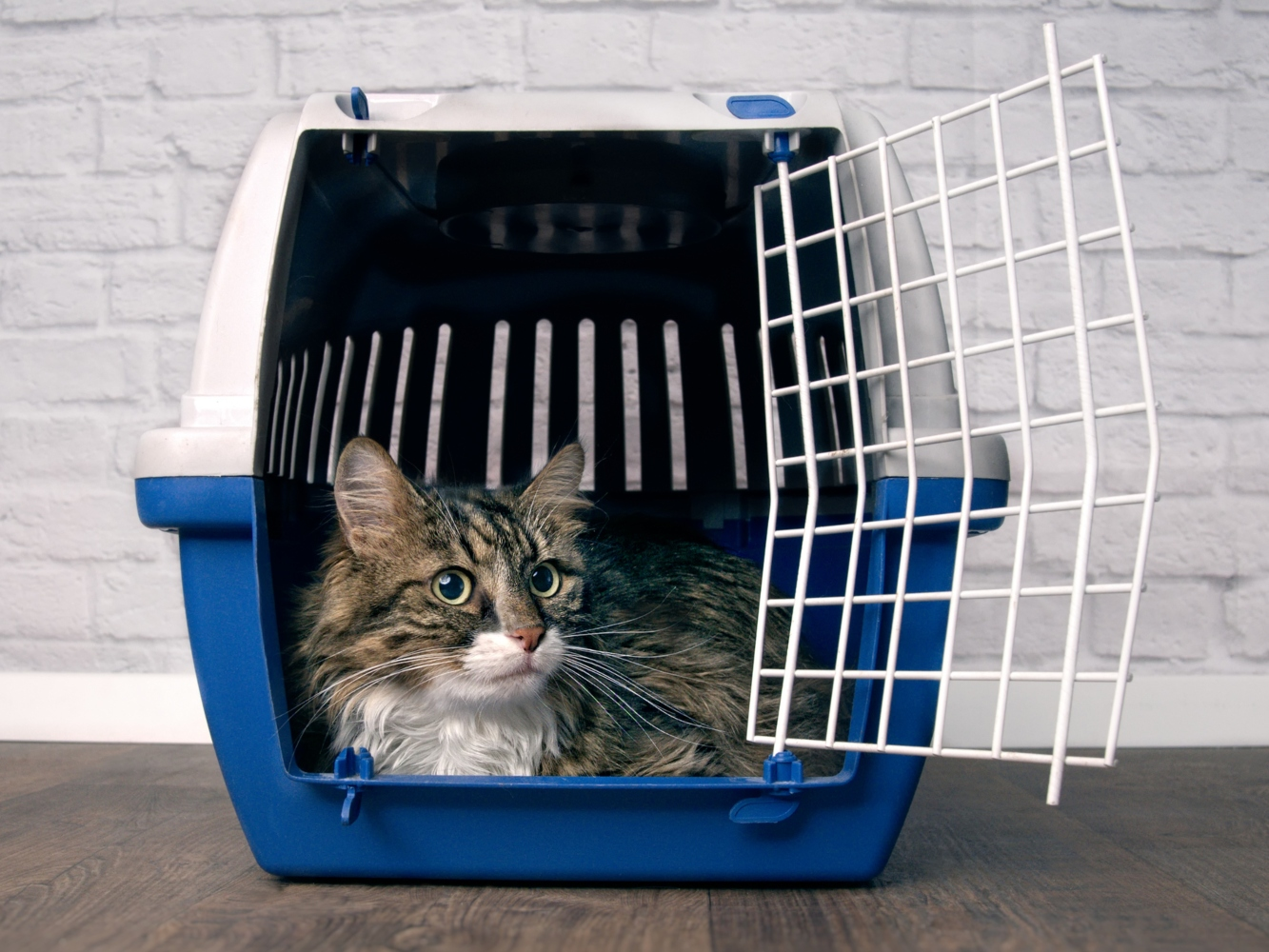 Deixar os gatos quando se vai em viagem
