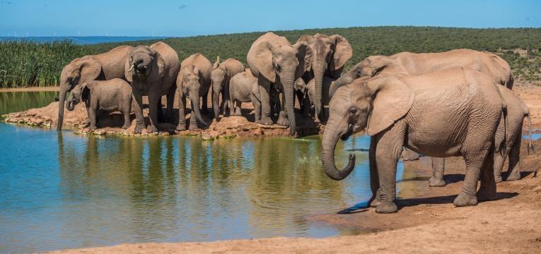 elefantes e Kruger parque