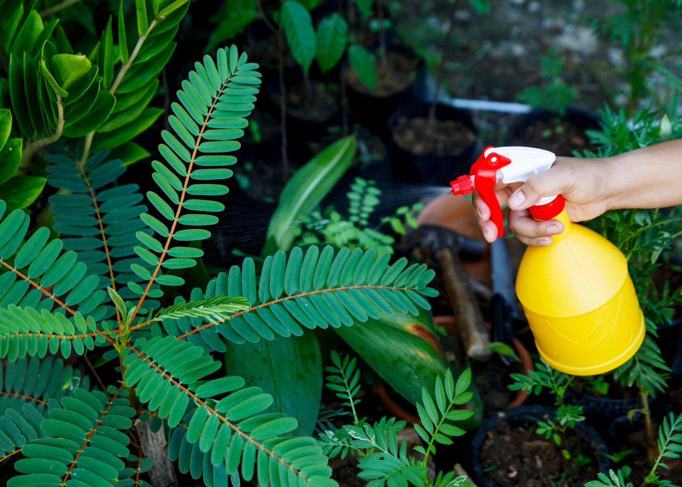 pessoa a borrifar plantas com herbicida natural caseiro