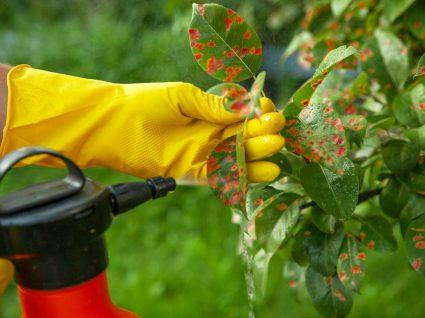 jardineiro a colocar herbicida nas plantas
