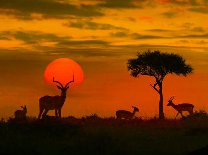 Pôr do sol no Kruger Park