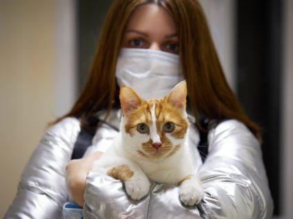 Pílula para gatas