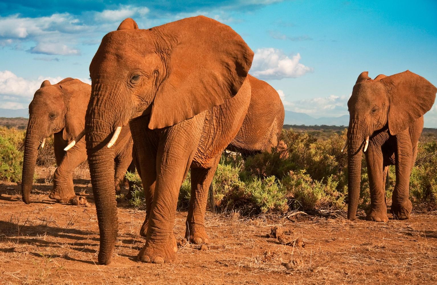 Quénia elefantes