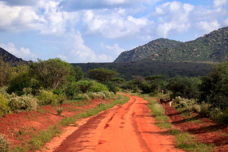Quénia Safari