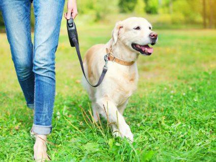 Trelas e colerias de cães podem provocar lesões