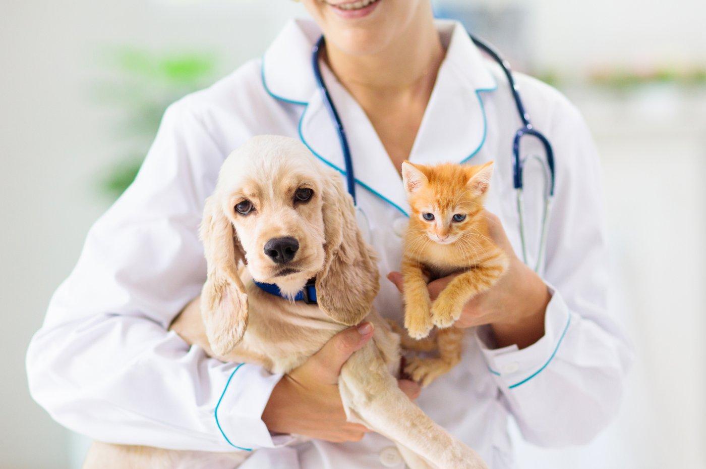 Animais vacinados no veterinário