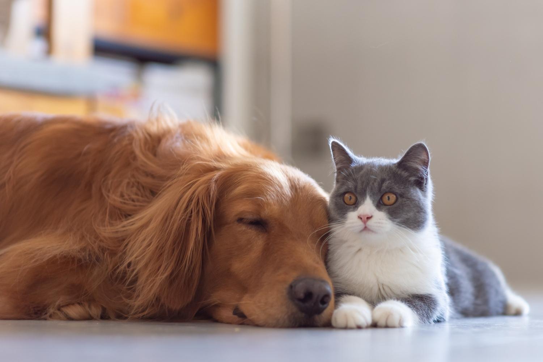 Cão e gato juntos a dormir