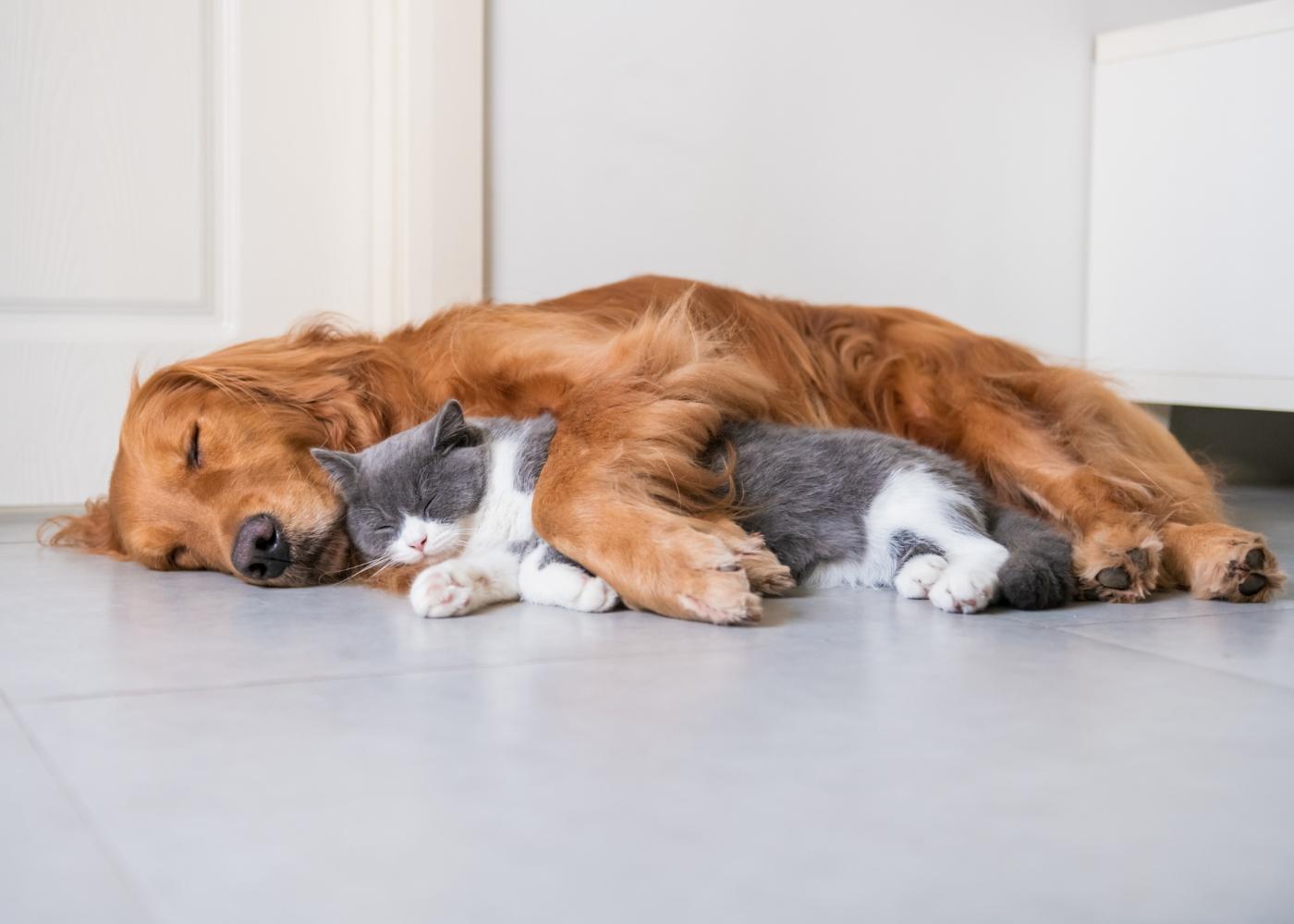 gato e cão a dormirem juntos no chão