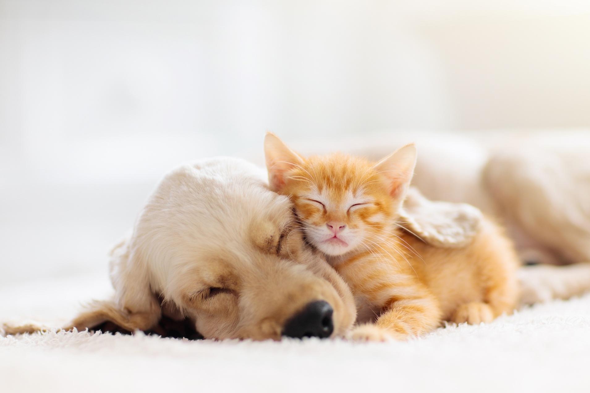 Gato e cão a dormirem juntos