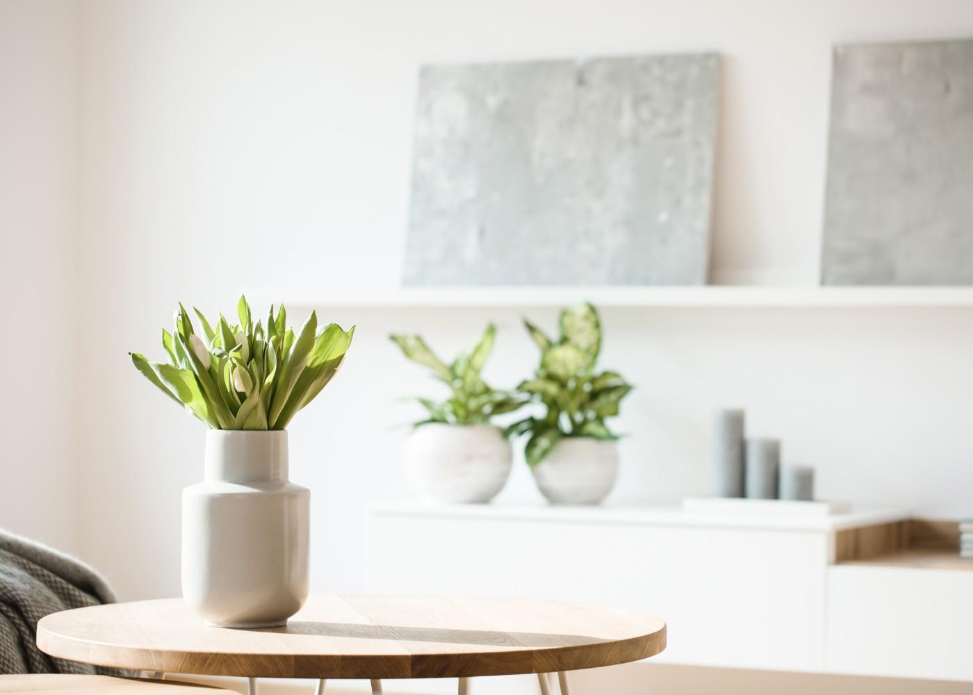 plantas num vaso numa mesa em sala de estar