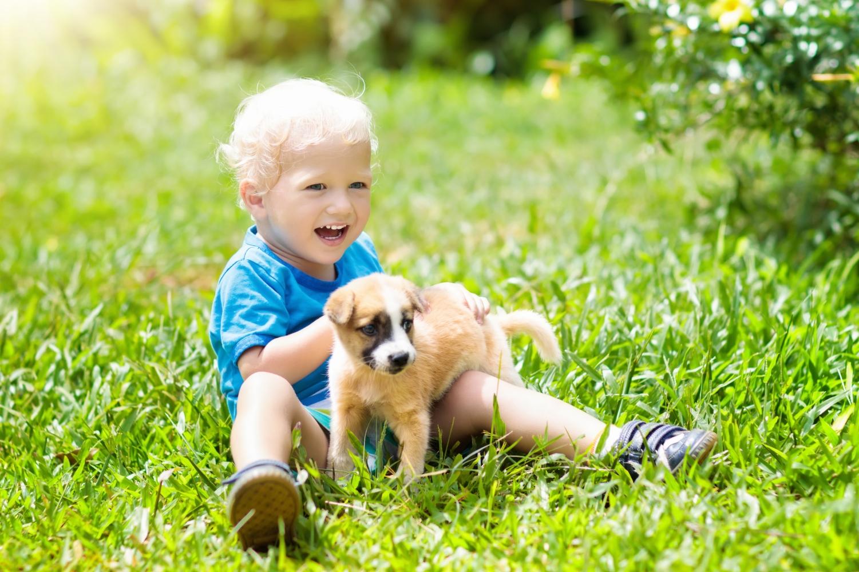 Aoptar um pet com crianças