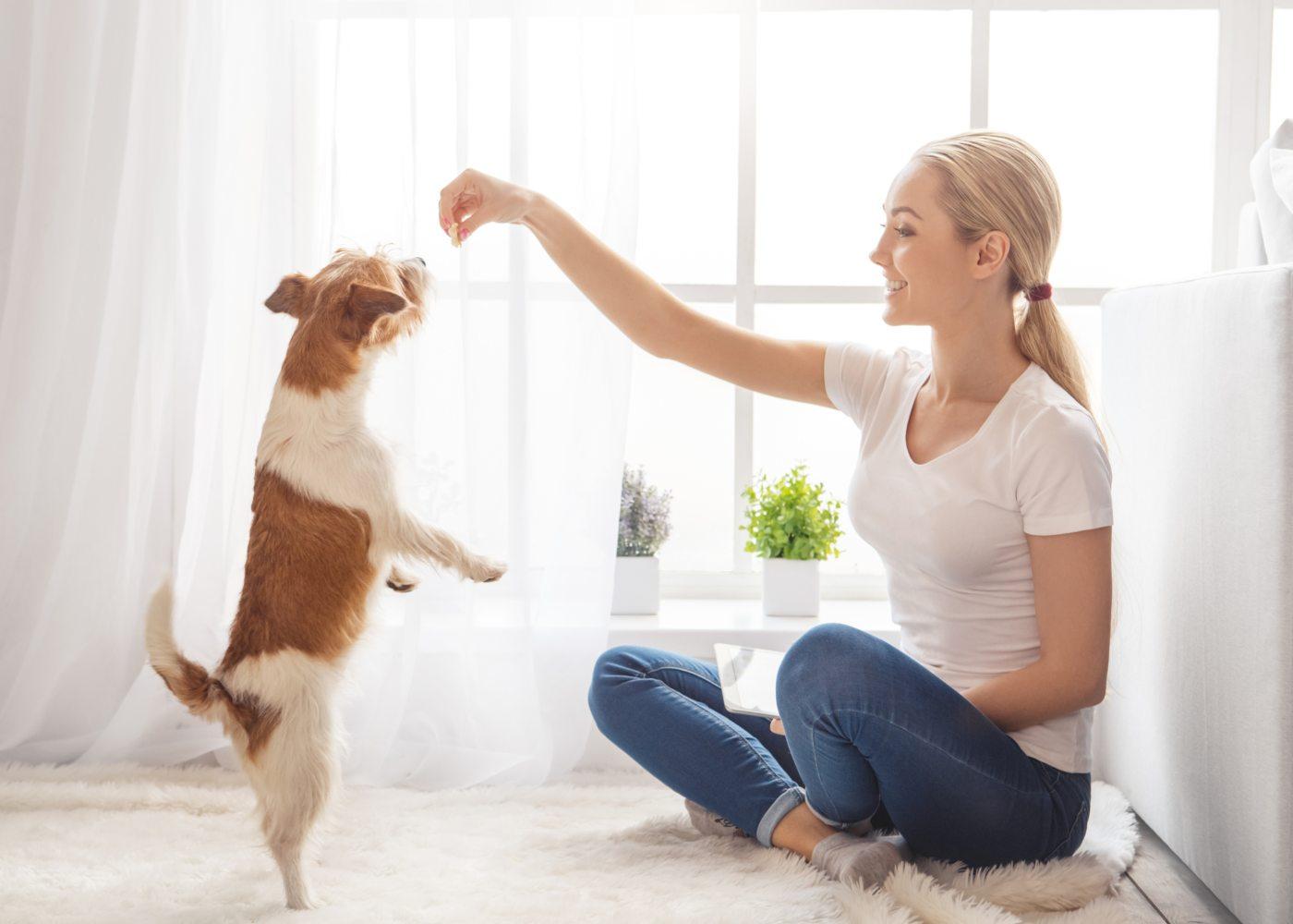 Mulher a brincar com animal de estimação