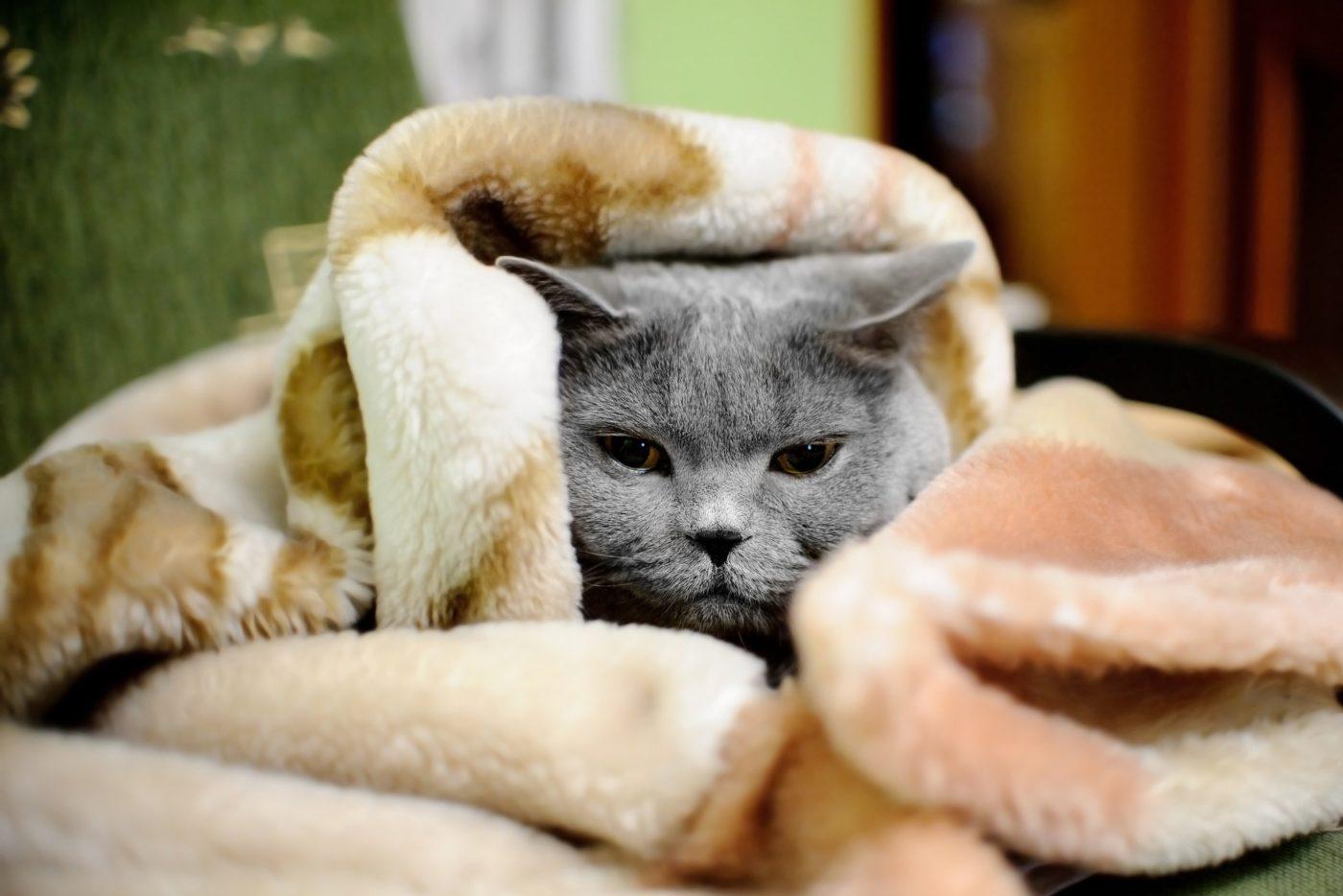 Cuidados com gatos no inverno