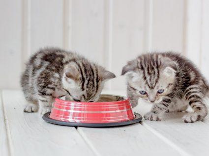 Gatos a comer
