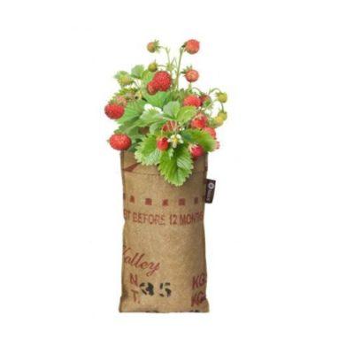 Kit para plantar morangos