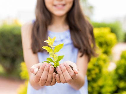 como recuperar plantas