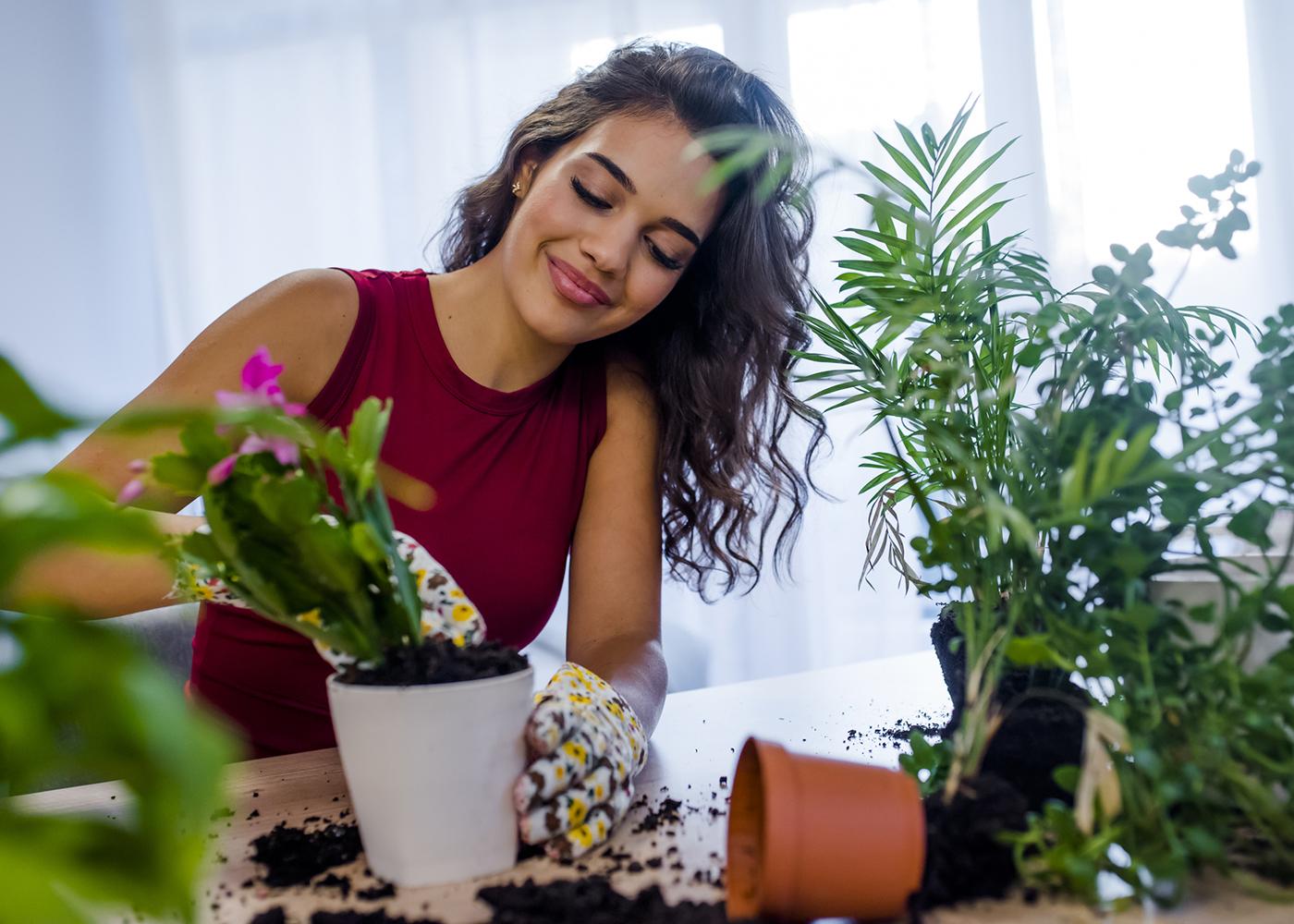cuidar de plantas