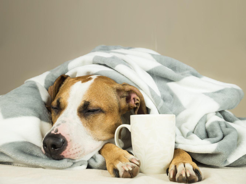 Cão protege-se do frio