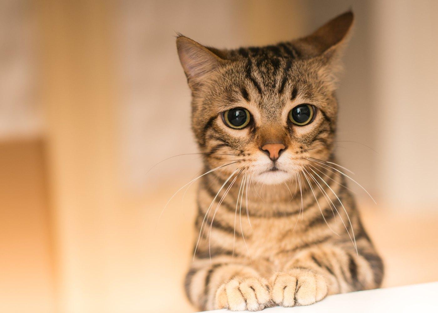Gato em hotel felino