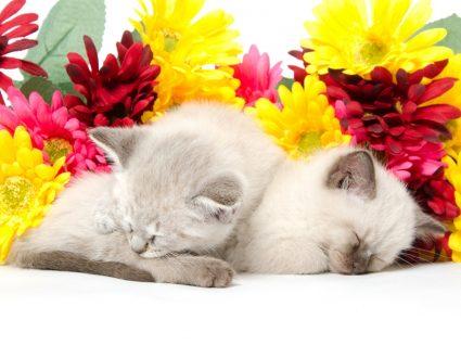 Gatos a dormir