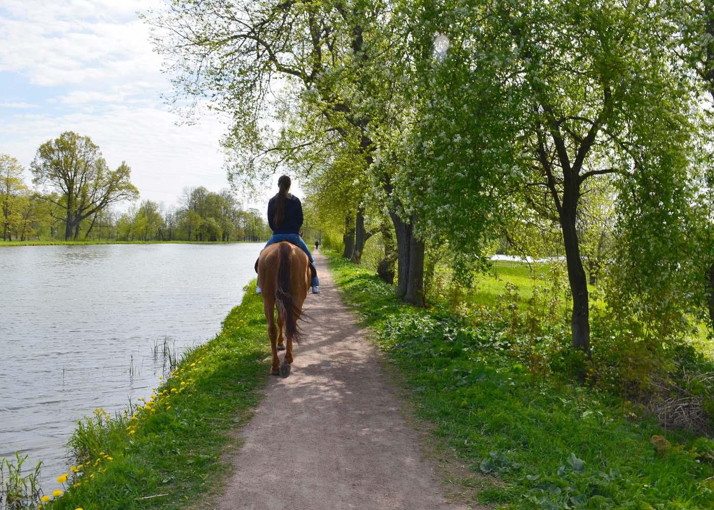 Mulher a dar passeio a cavalo