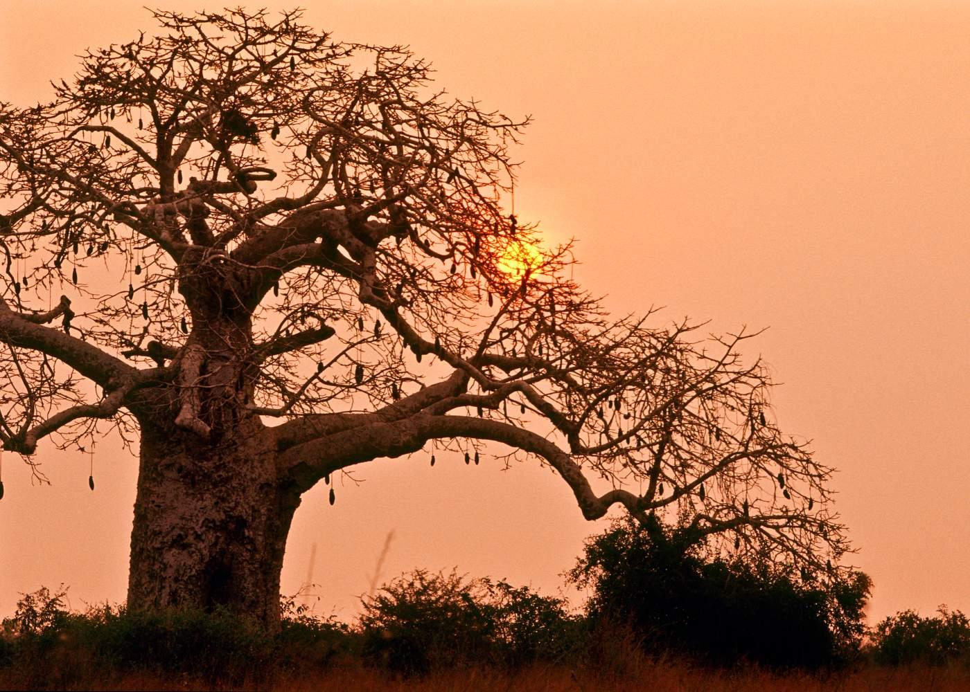Parque de Kissama em Angola