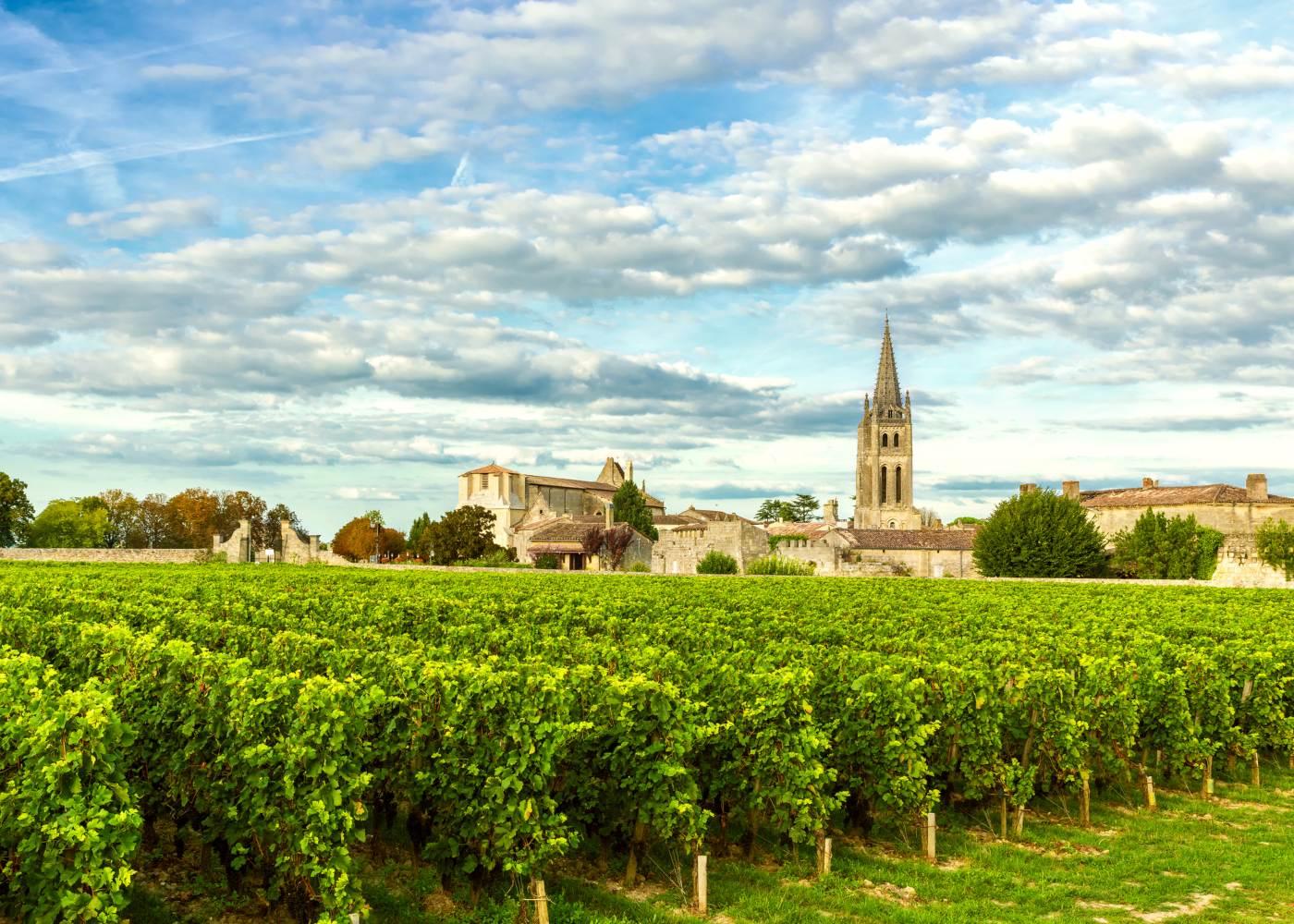 Vinhas do famoso vinho de Bordéus