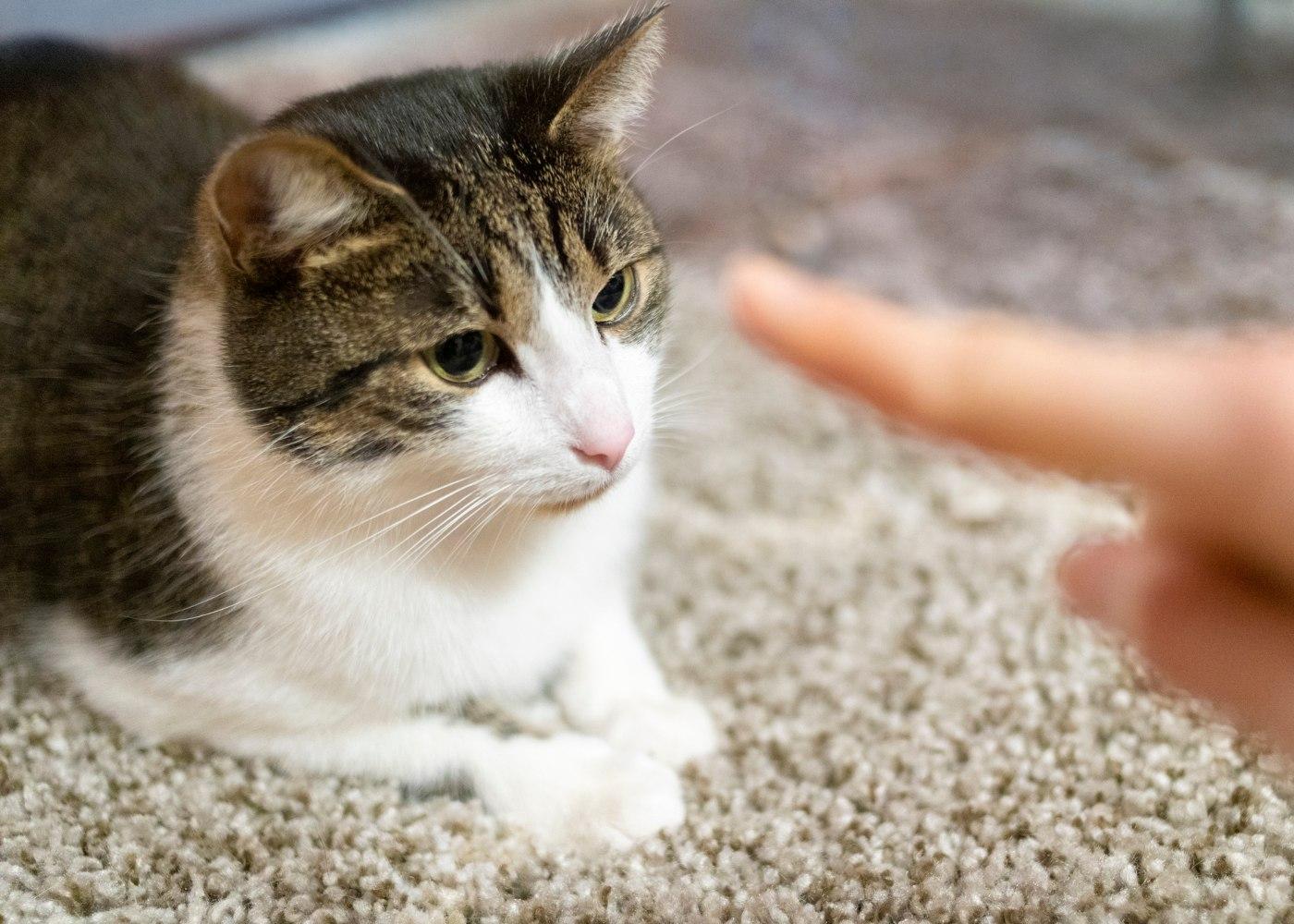 Mulher a educar um gato