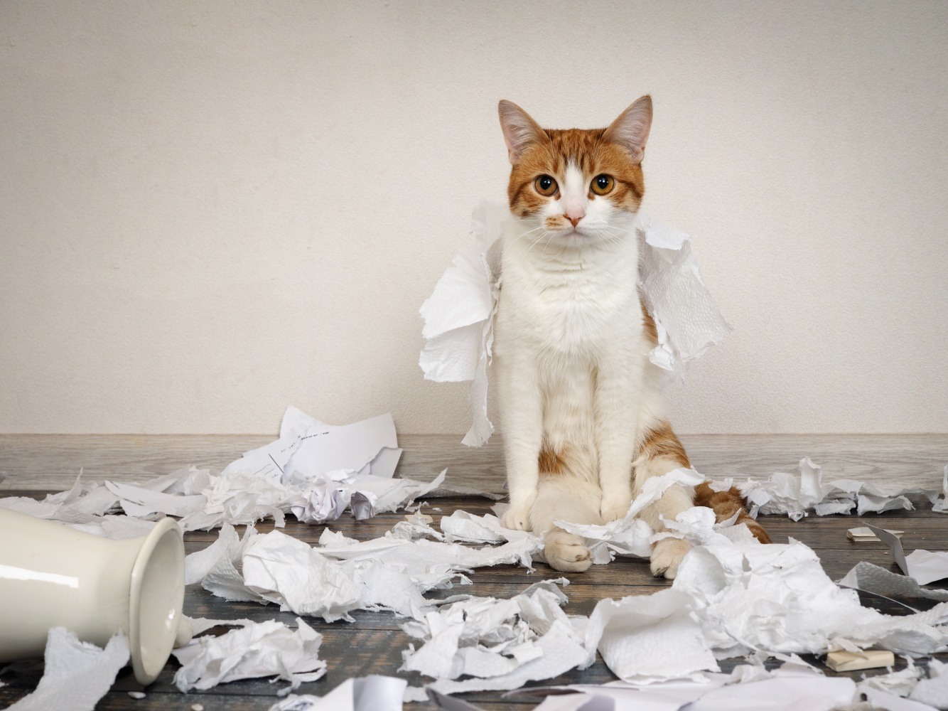gato no meio de papéis