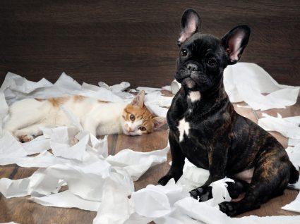 pets destruidores em casa