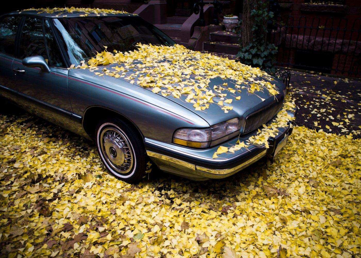 Carro estacionado coberto de folhas
