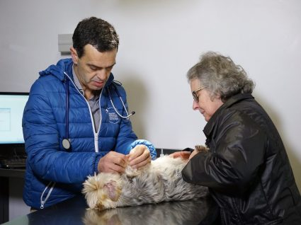 Congresso veterinário em Santa Maria da Feira