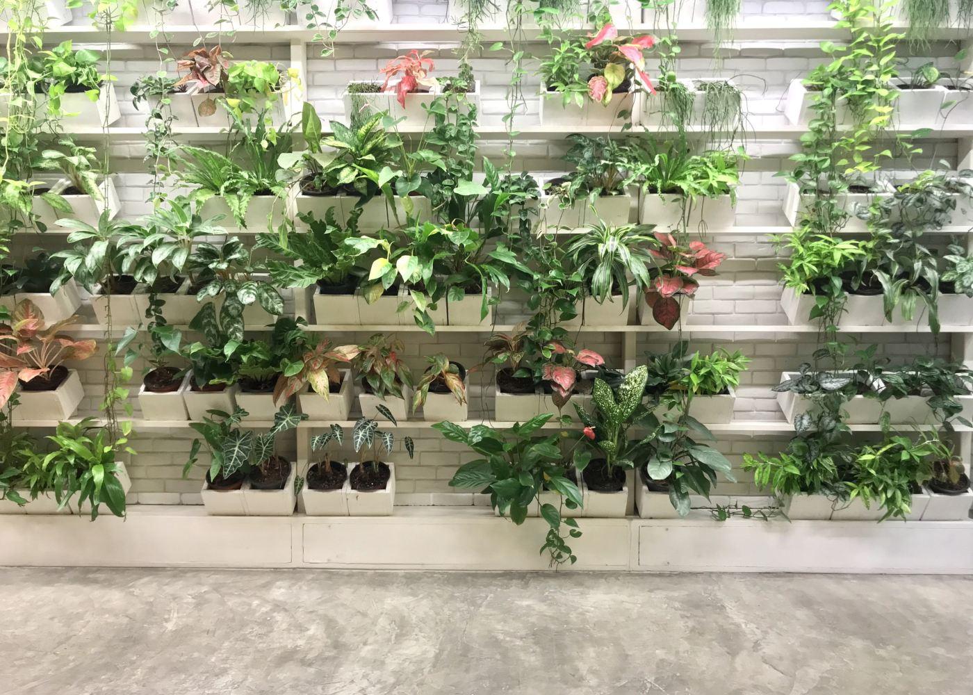exemplo jardim vertical