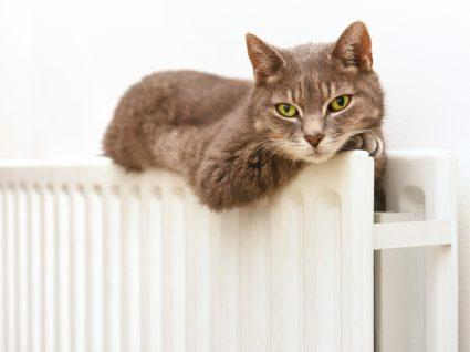 manter o gato feliz em casa