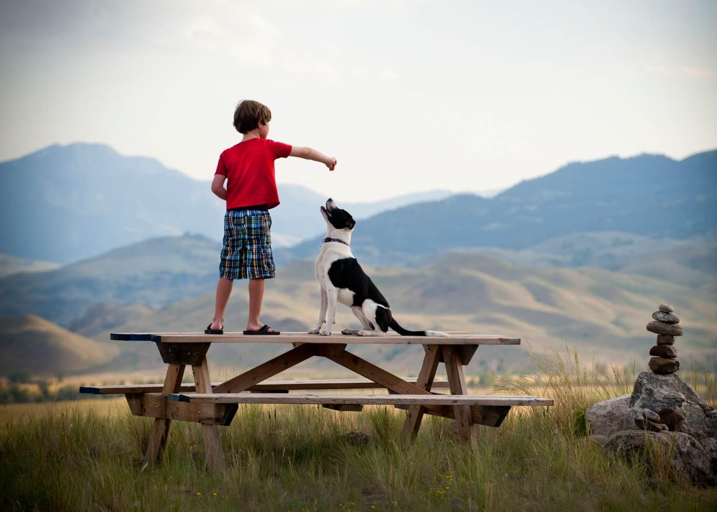Criança a brincar com o cão
